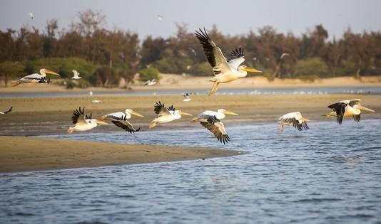 ile-aux-oiseaux